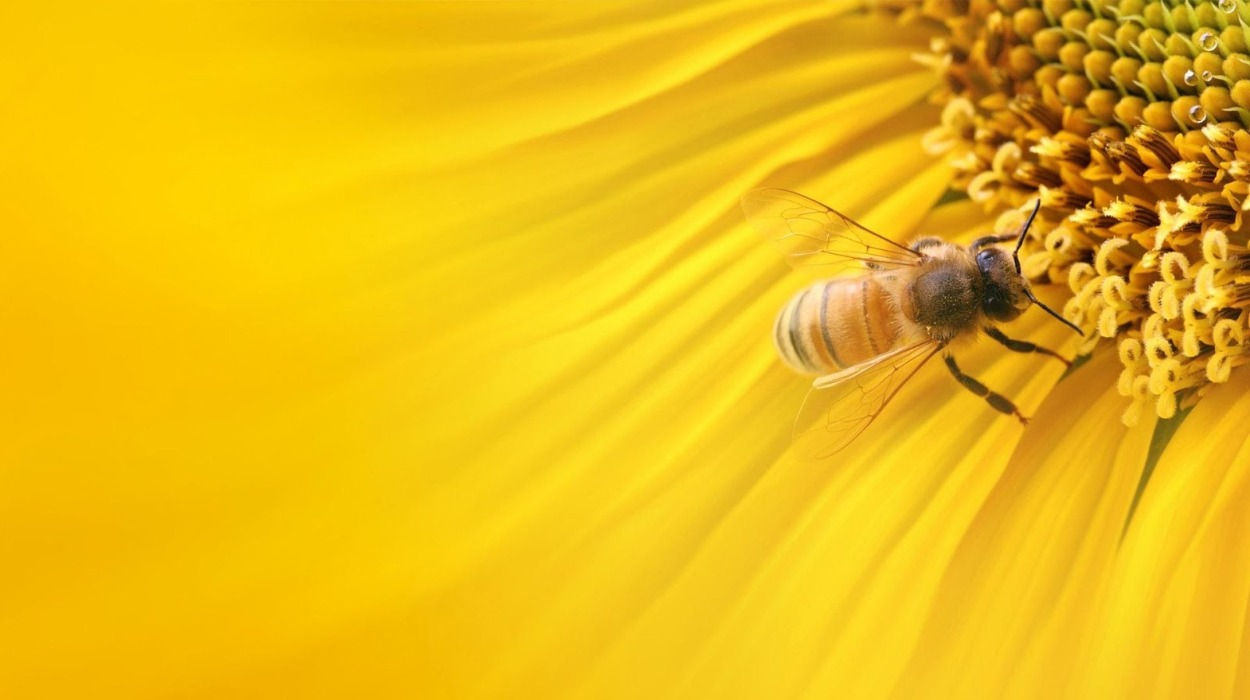 The UN designated 20 May as World Bee Day.